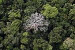 """""""地球之肺""""要不保? 1/5亚马孙雨林不吸碳反而更排碳"""