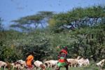 东非蝗虫6月前可能增数百倍 联合国吁积极因应危机