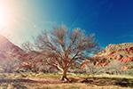 1月为1880年有气象记录以来的最热1月