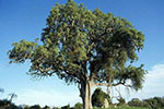 匈牙利:每增一婴儿就种10棵树