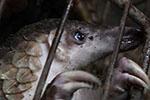 食用野生动物已成多地传统 专家建议建设惩罚性制度