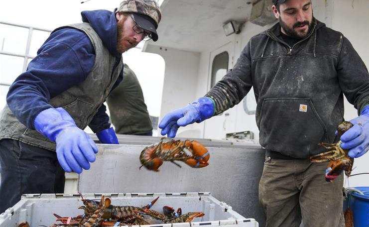 美龙虾业期待重返中国市场