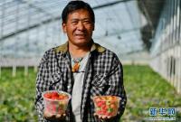年楚河畔不同春――探访西藏白朗国家级蔬菜标准化生产示范区