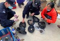 云南一女子当街叫卖野生动物制品被查