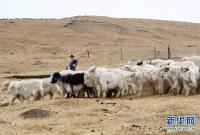 """从贫困户到致富能人――藏族村民宋天柱""""变身""""记"""
