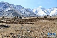 拉萨:社区造林惠民生