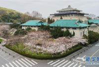"""武汉大学开通""""云赏樱"""" 向公众展示校园樱花美景"""