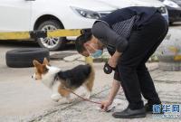 """武汉:动物医院里的临时""""奶爸"""""""