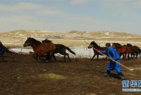 内蒙古首支马背警队:警民联手驯马忙