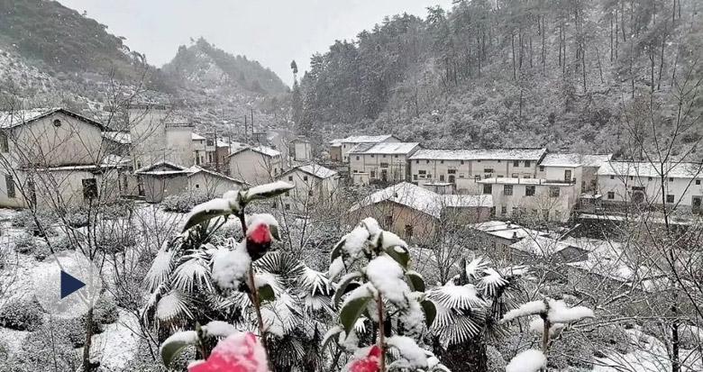 宁波这里下雪了!浙江这些地方已白茫茫一片……