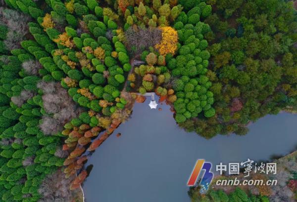 """深湖:位于公园深秀谷内。深湖树种以柏树、大叶香柏、日本扁柏等针阔混交林为主,及""""树在水中生""""深湖滨的一片池杉林.jpg"""