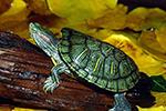 主要来自美洲…我国已发现660多种外来入侵物种