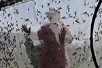 山东乐陵:蚂蚱养殖助脱贫