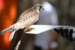 40只珍稀野生鸟类在吉林放归自然