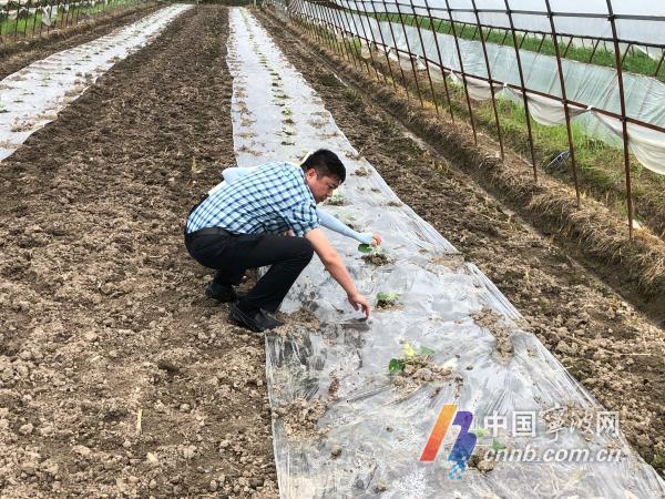 梅雨连绵 宁波早稻亩产或将减产10% 花生水蜜桃很