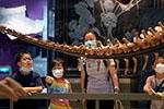 """上海:自然博物馆迎来""""暑期档"""""""