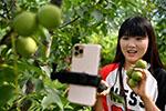陕西丹凤:网络带货让山区产品走出大山