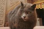 印经院的猫