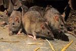 内蒙古达茂旗终止鼠疫IV级响应 所有密接者检测均为阴性