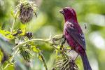 重庆南川:金佛山鸟趣