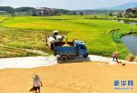 湖南双峰:晴好天气收稻忙