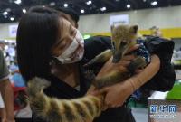 曼谷举办宠物展