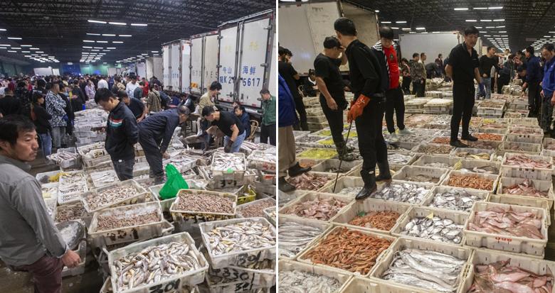 双节前夕东海鱼虾日均交易量增两成 价格两极分化