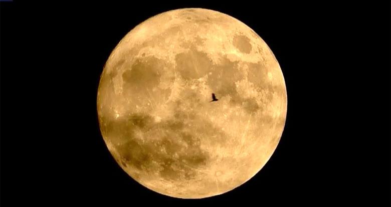 会动的中国画!实拍飞鸟圆月