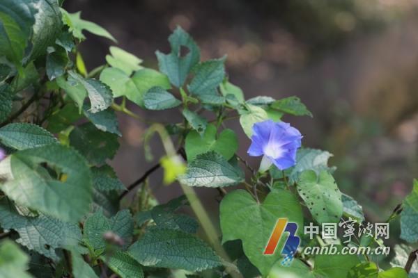 秋阳余额不足 冷空气即将上线 明天宁波部分地区有小雨-新闻中心-中国宁波网