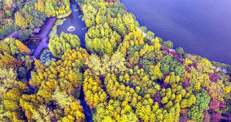 日湖公园秋色浓