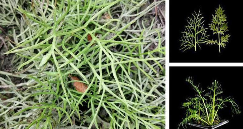 罕见!宁波发现濒危植物