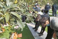 21位逝者长眠桂花树下 这种安葬方式被越来越多宁波市民认可接受
