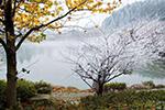 宁波迎来大雪时节 这周最高气温17℃ 入冬还得再等等