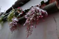 官宣!宁波14日入冬 山区将出现初雪