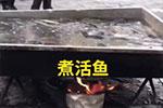 """活鱼""""煮""""着卖!哈尔滨这一幕看呆网友"""