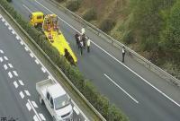 蛮牛闯入高速公路伤人 宁波特警开枪将其击毙
