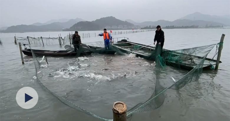 东钱湖冬捕进行时 今冬第一网来了