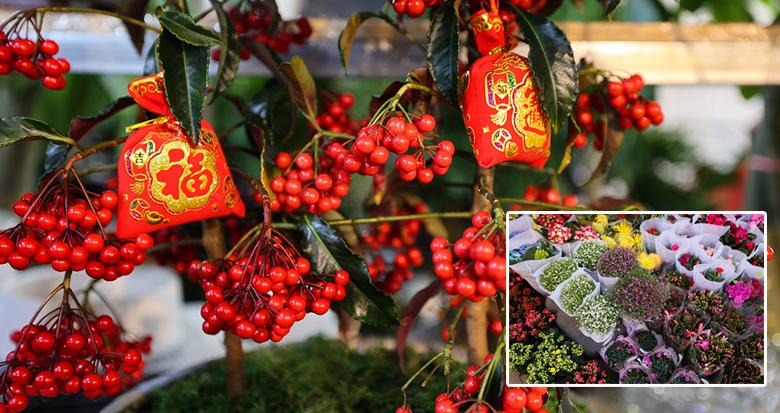 春节临近 甬城年宵花迎来销售旺季