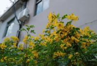 """宁波再施人工降雨!元宵节这场雨要让周末""""泡汤""""?"""