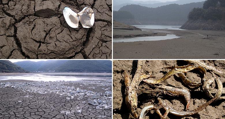 宁波水库见闻:滩地龟裂、鱼蚌成干……