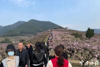 """热闹程度堪比春节!宁波赏花游迎""""旺发时段"""""""