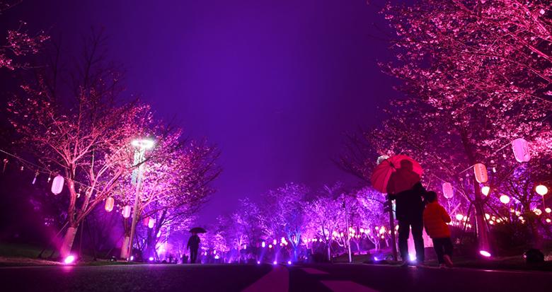 宁波这个地方的夜樱 美得太梦幻