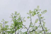 宁波今天入梅了!比常年早了3天 大雨马上杀到