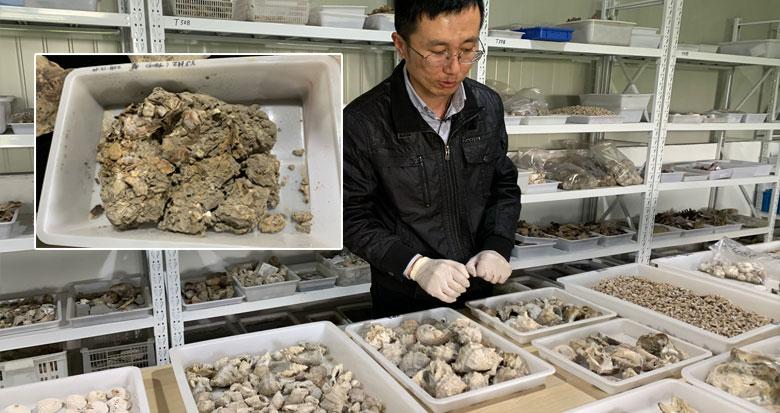 井头山遗址考古队员端上8000年前海鲜大餐