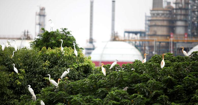 全国石化行业首个白鹭天然栖息地对外开放