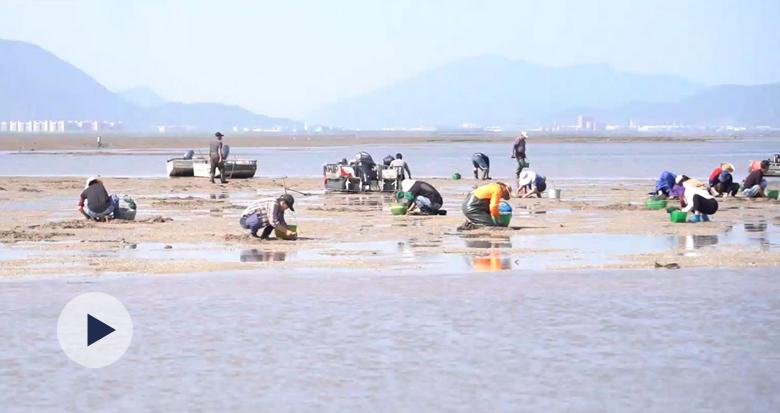 金银滩上捡贝螺!宁海每年最适合赶小海的日子到了