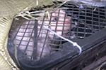"""寄递""""宠物盲盒""""猫狗奄奄一息 到底谁在违法?"""