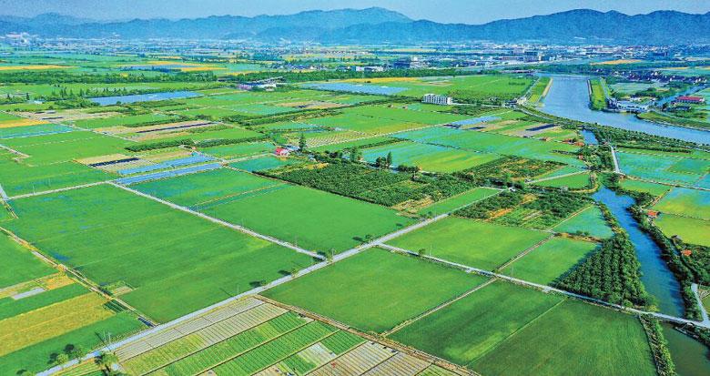 宁波早稻栽插已完成24.66万亩