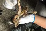 苏州通报中通宠物盲盒事件:发现快件13件 动物已死亡