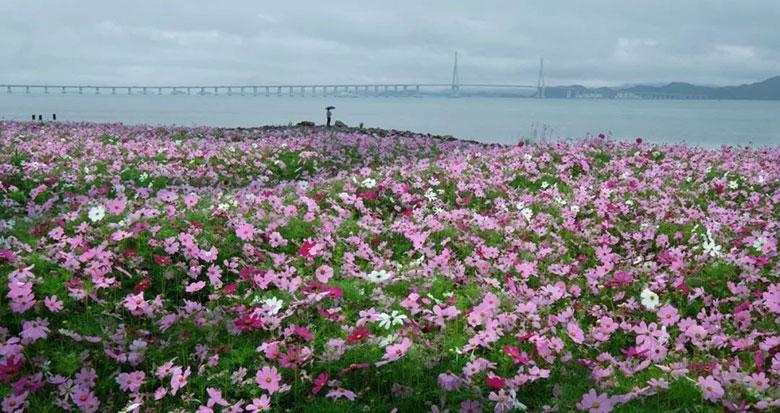 宁波这片粉色花海太浪漫了!市区出发1小时就到